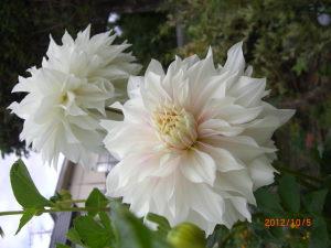 10月の花 070_SP0000.JPG