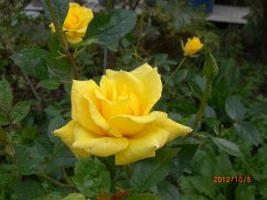 10月の花 071_SP0000.JPG