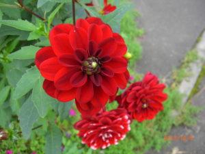 10月の花 061_SP0000.JPG